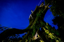 tree shoot olivia color